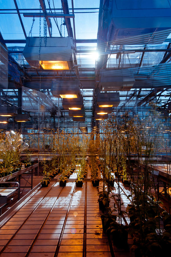 Download Greenhouse With Genetically Modified Plants Stock Photo - Image: 25782796