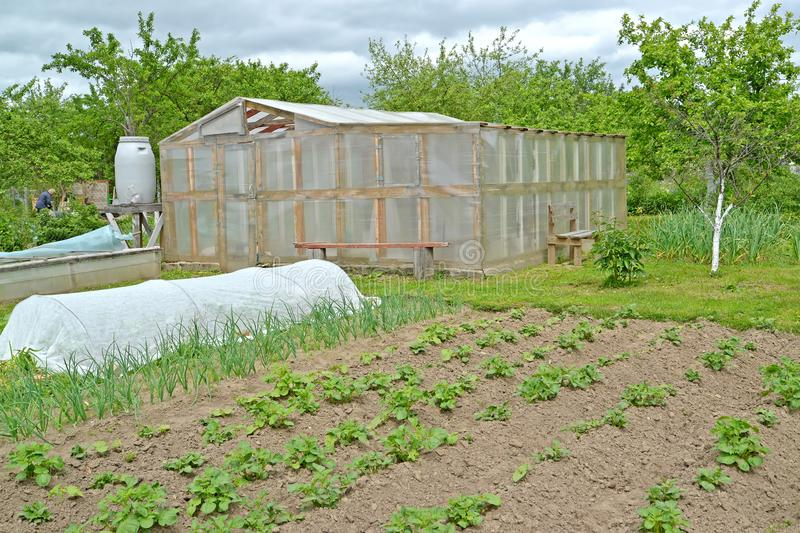 The greenhouse, hotbed and kitchen garden on the seasonal dacha. Spring.  stock photos