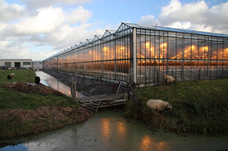 Greenhouse in Moerkapelle with growing lights in orange colour which is creating light pollution royalty free stock image