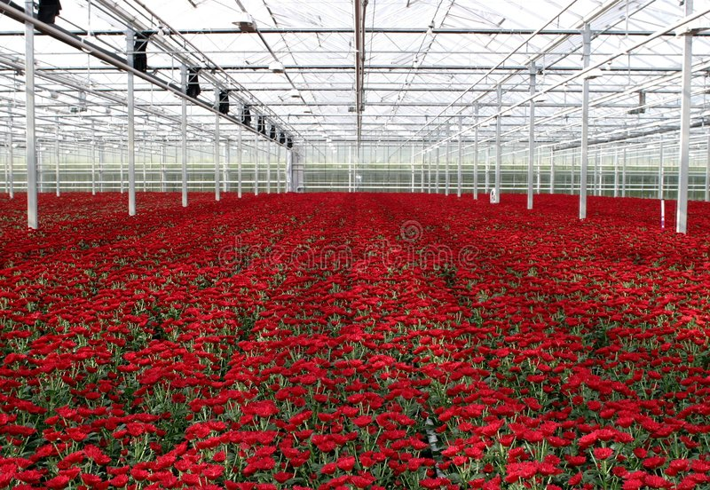 greenhouse nursery royalty free stock photography