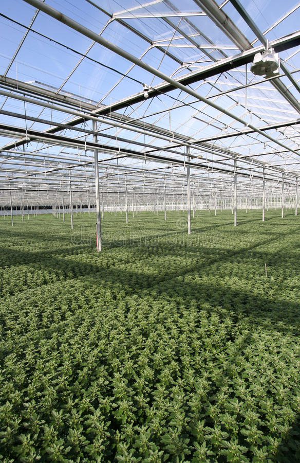 Download Greenhouse Plants Stock Photos - Image: 13973933