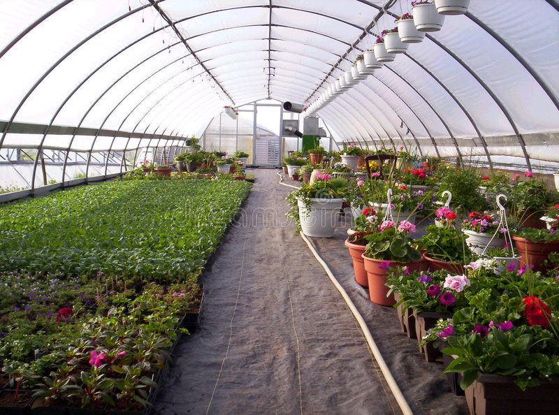 Greenhouse plants royalty free stock images
