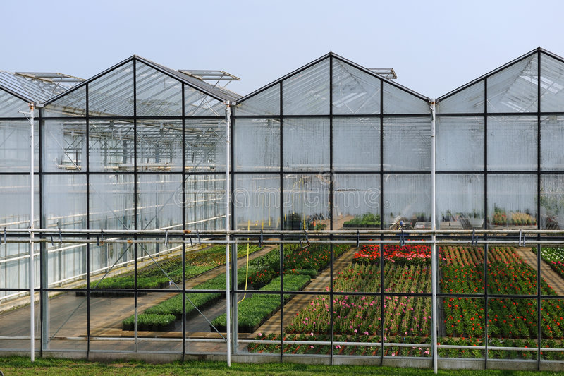 Greenhouse with plants royalty free stock image