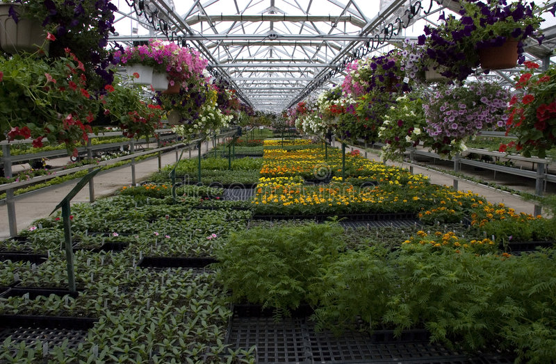 Download Greenhouse Plants And Flowers For Sale Stock Photos - Image: 9315123
