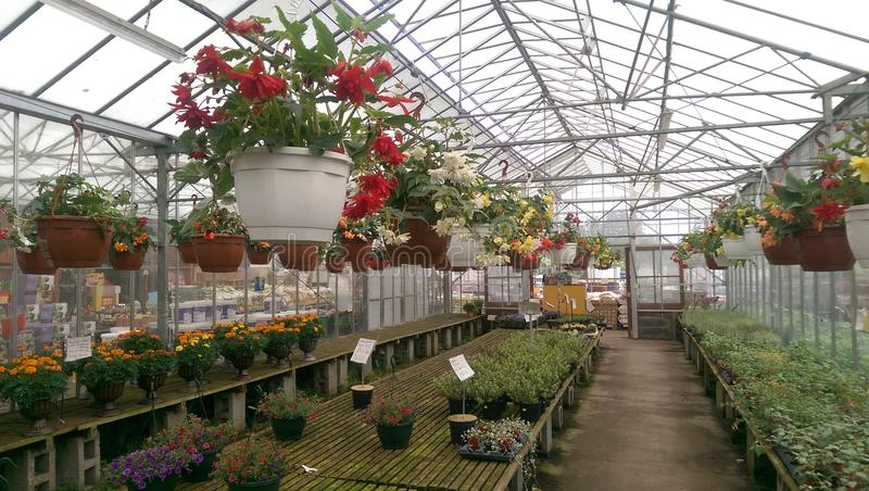 Greenhouse Plants and Flowers For Sale stock image