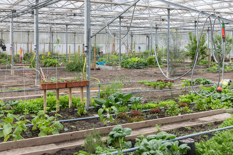 Greenhouse with several small vegetable gardens. Dutch Greenhouse with several small community allot gardens royalty free stock images