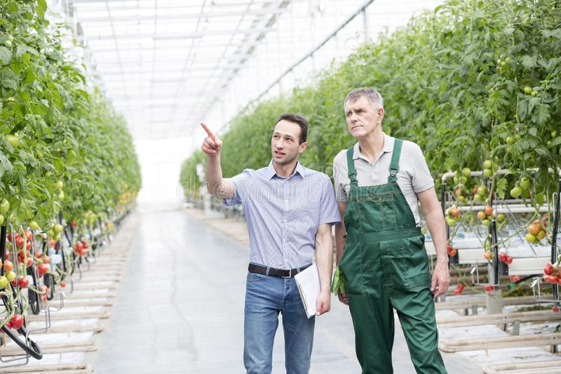 Supervisor pointing at plant while discussing with farmer in greenhouse stock photos