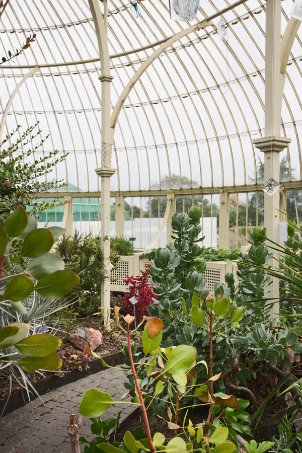Greenhouse. Traditional greenhouse with plants and foliage in Ireland royalty free stock photo