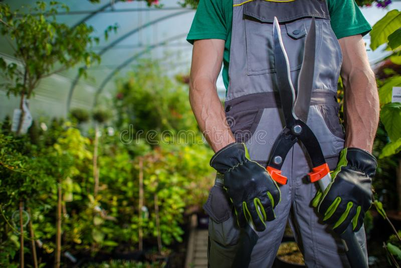 Greenhouse Trimming Job stock images