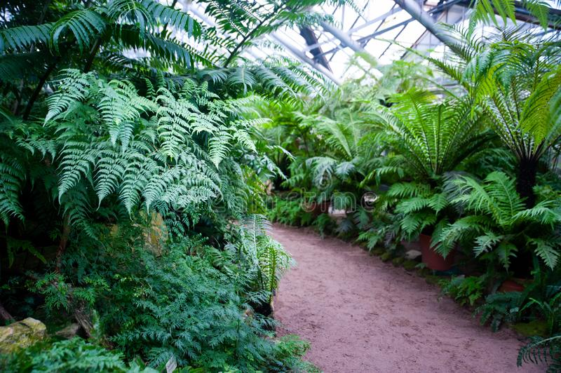 Greenhouse of tropical fern plants, Botanical stock images