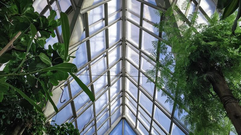 Sky and Glass from Greenhouse. Greenhouse view up , beautiful shapes and colors with coming up sunset royalty free stock photo