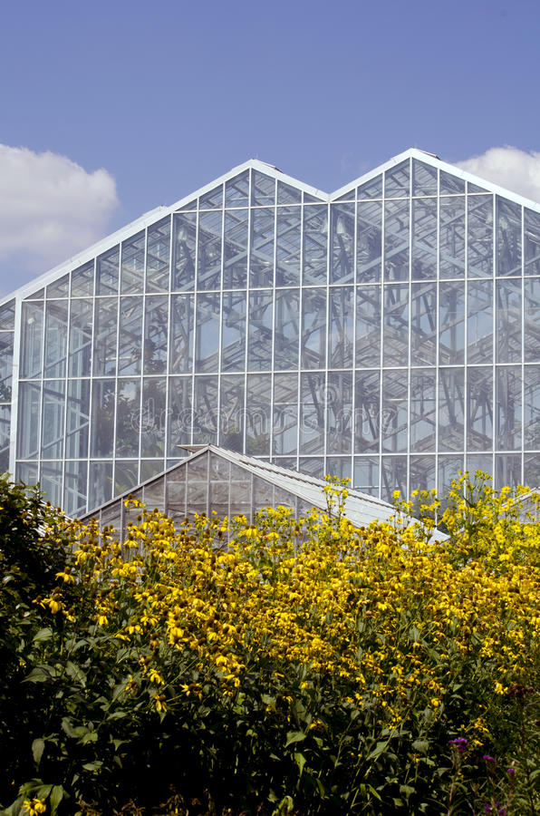 Greenhouse and yellow flowers. A large glass greenhouse is shown with a field of yellow brown eyes susan flowers all around it stock photo