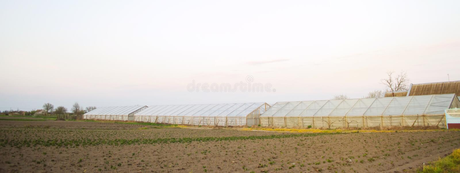 Greenhouses in the field for seedlings of crops. Growing organic vegetables. Lending to farmers. Farmlands agriculture agro-. Industrial complex. Winter crops stock image