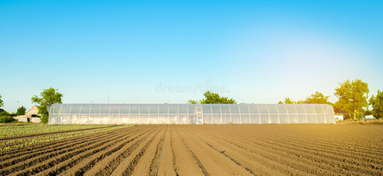 Greenhouses for growing vegetables and fruits in the field. Farming Agriculture Farmland. Agro-industrial complex. Lending to. Farmers. Selective focus royalty free stock photo