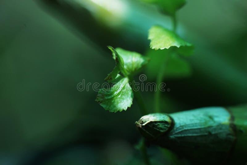 Greenies στοκ φωτογραφίες με δικαίωμα ελεύθερης χρήσης