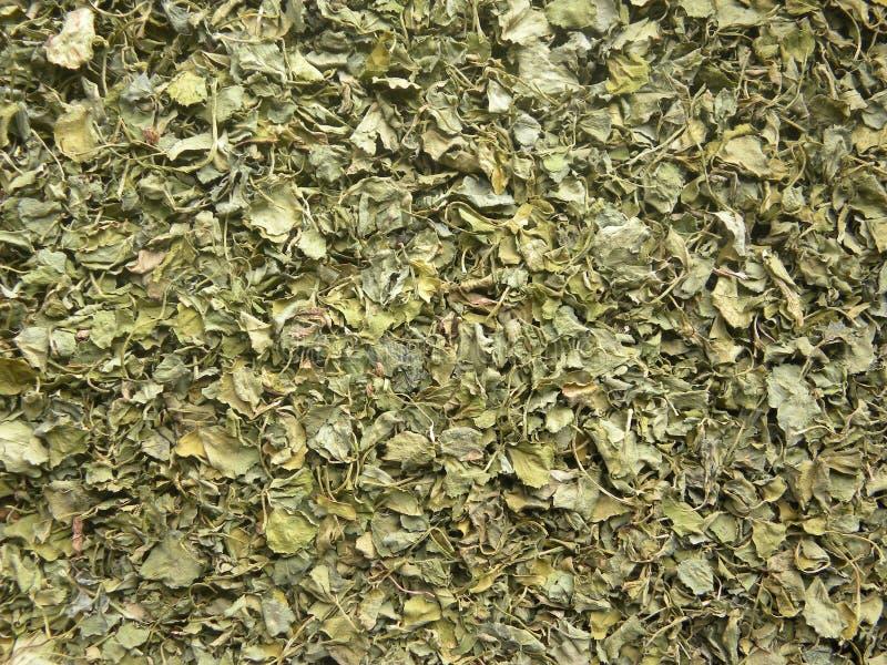 Dry Fenugreek leaves stock photos