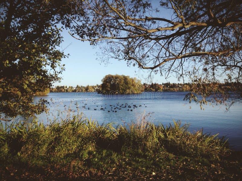 Greenlake Seattle. A view of Greenlake, Seattle Wa stock photo