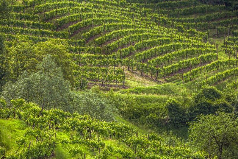 greenland foto de stock