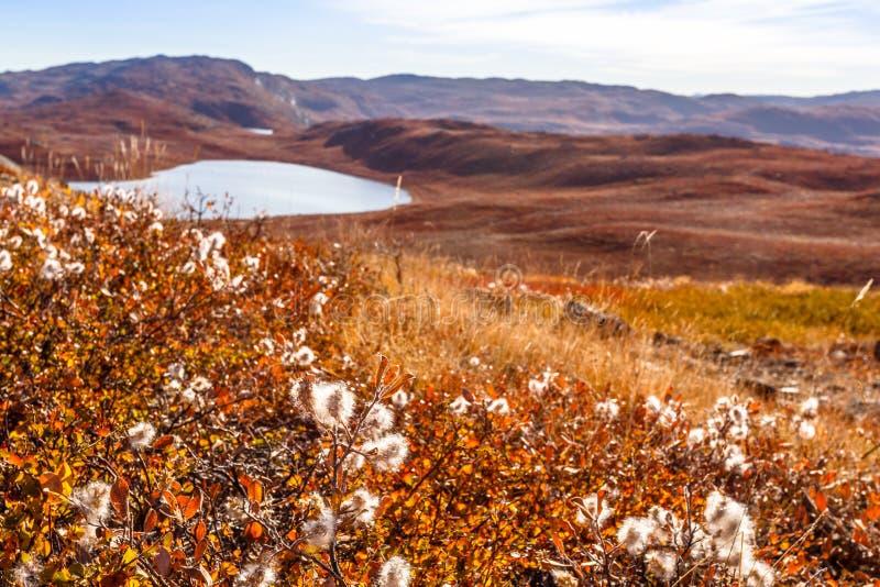 Greenlandic orange tundralandskap för höst med sjöar och mounta royaltyfria bilder