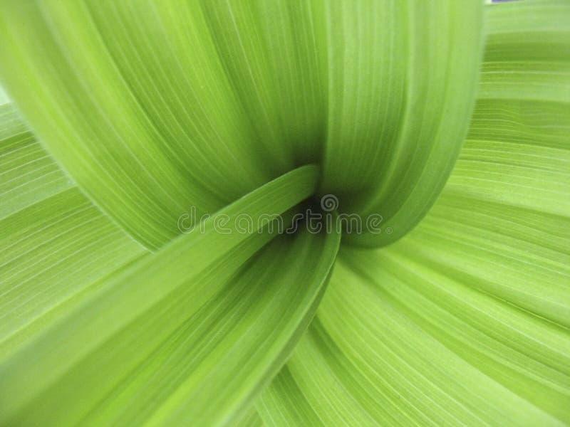 Greenleaves Arkivfoto