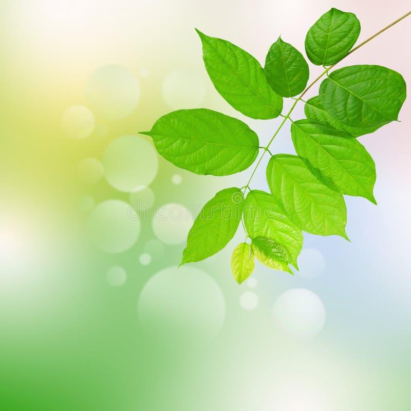 Greenleaves och harmonibakgrund royaltyfri bild