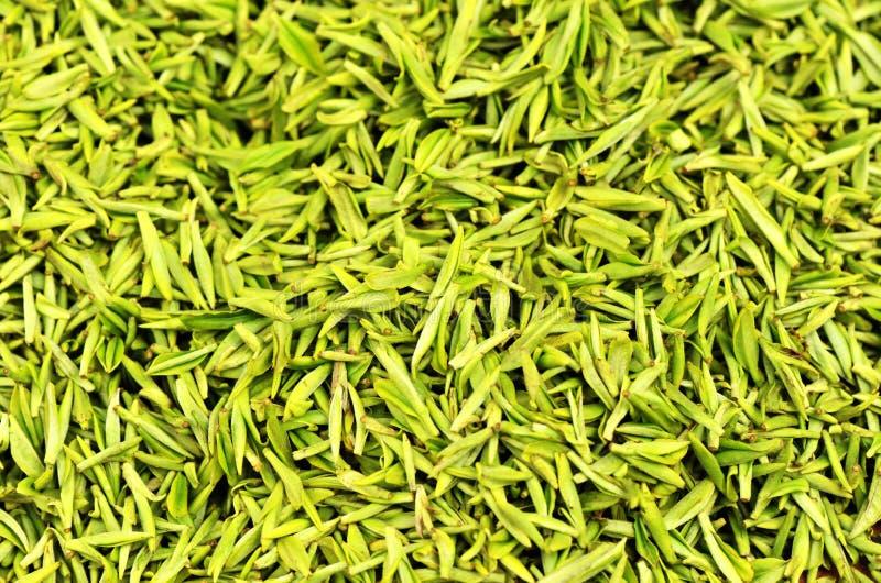 greenleaves valde tea royaltyfri foto