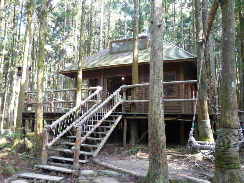 Greenlight演播室、风景公园有树的&走的足迹 免版税库存照片