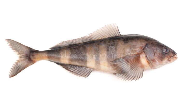 Greenling image stock image du nourriture chelle for Nourriture du poisson