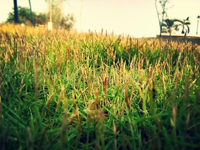 greenness στοκ φωτογραφία με δικαίωμα ελεύθερης χρήσης