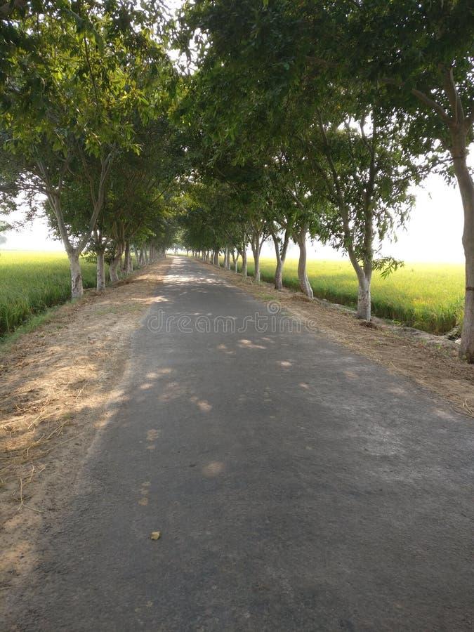 Greenry drzewa drogowi obraz royalty free
