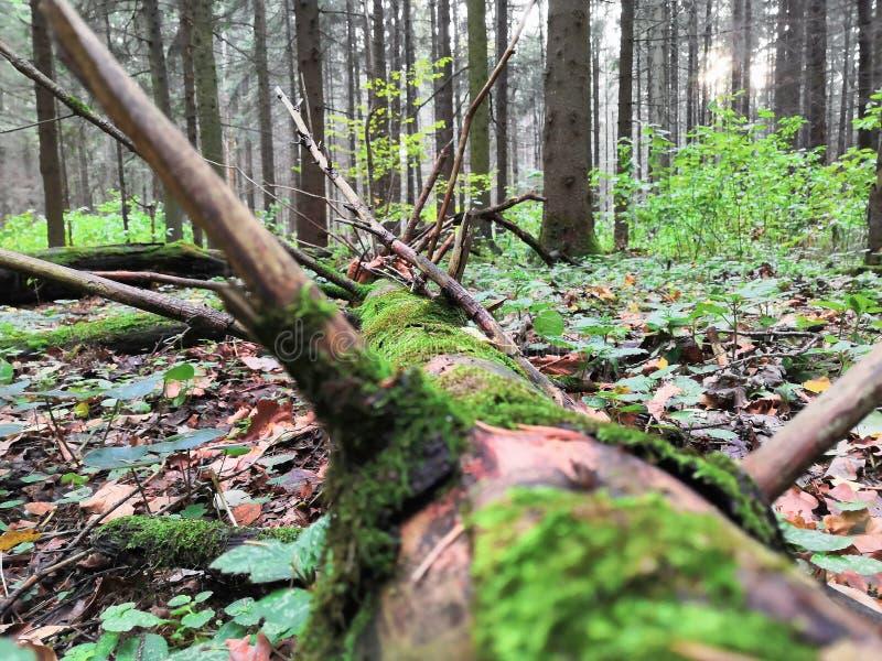 greens стоковые фотографии rf