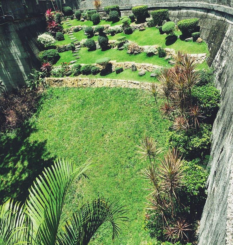 greens стоковое изображение