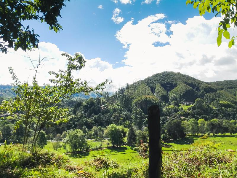 Greens, grass and mountains behind trees royalty free stock images