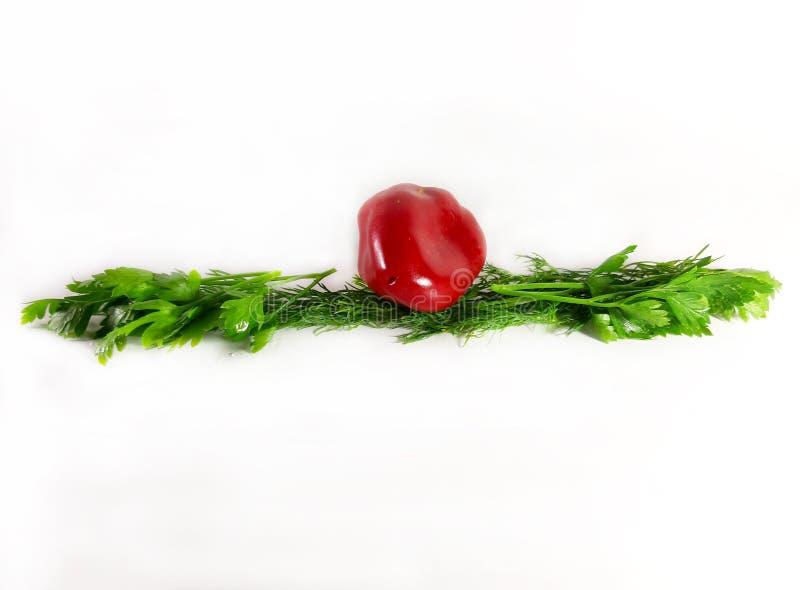 Greens grens, ecologie, voedsel, dille Geïsoleerde groene lijn voor ontwerp, witte achtergrond stock foto