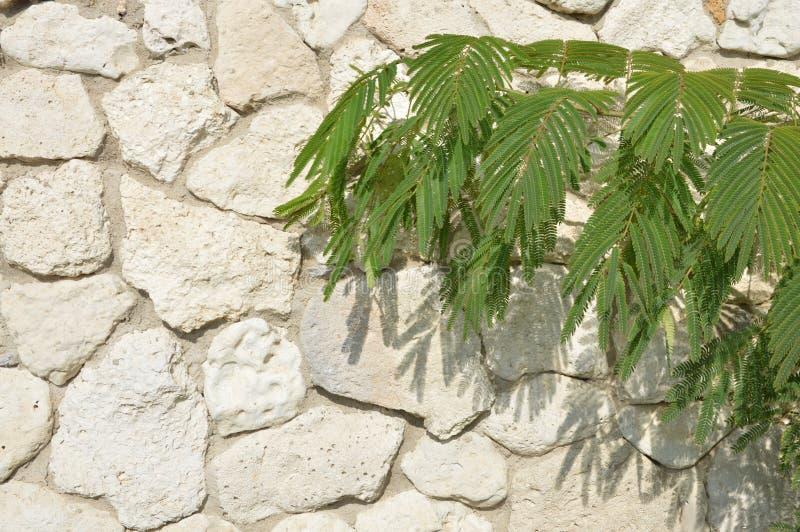 Greens op de muur stock afbeelding