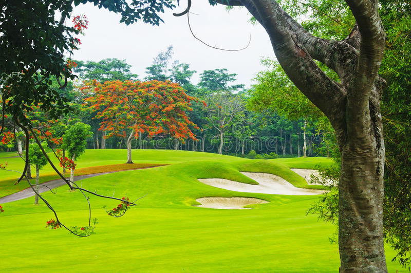 Greens van het golf stock fotografie
