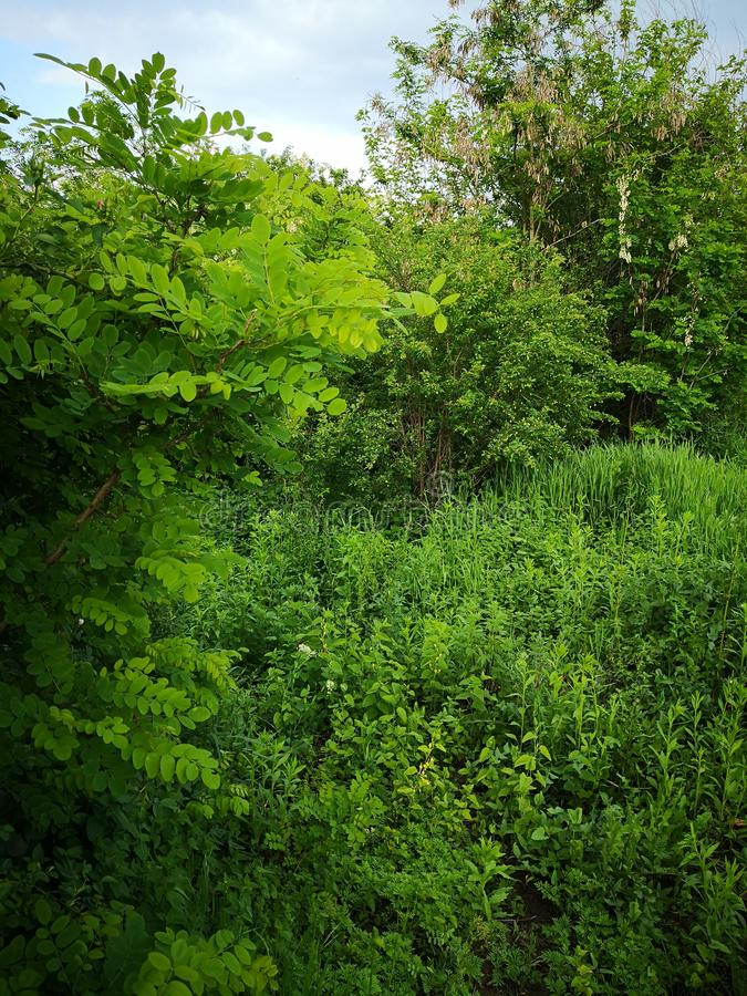 Greenscape obrazy royalty free