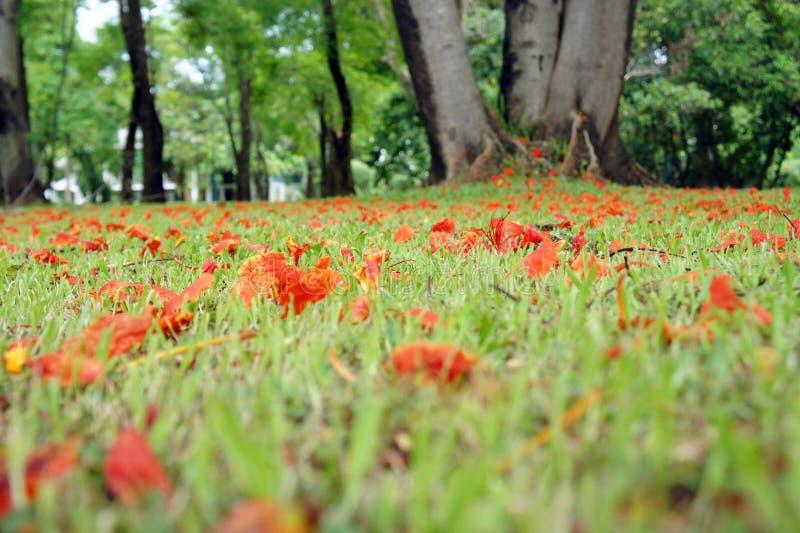 greensward, grama, verde, relvado, gramado, calmo fotografia de stock royalty free