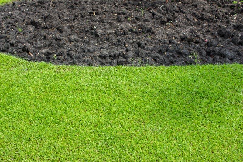 Greensward im Gartenhintergrund stockfoto