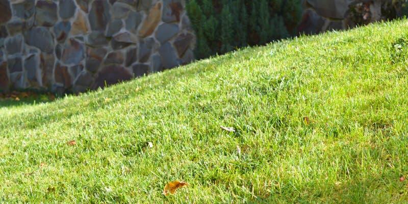 Greensward na słonecznym dniu zdjęcie royalty free