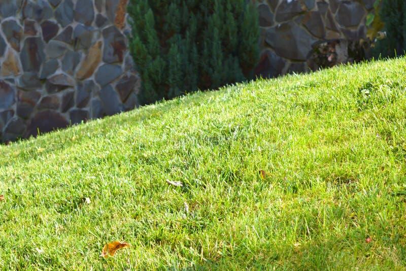 Greensward na słonecznym dniu zdjęcia royalty free