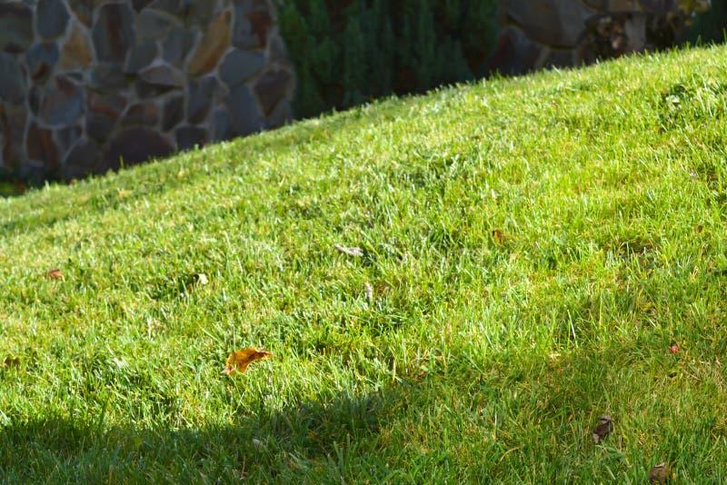 Greensward na słonecznym dniu obrazy royalty free