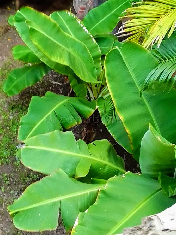 greentrees fotografia stock