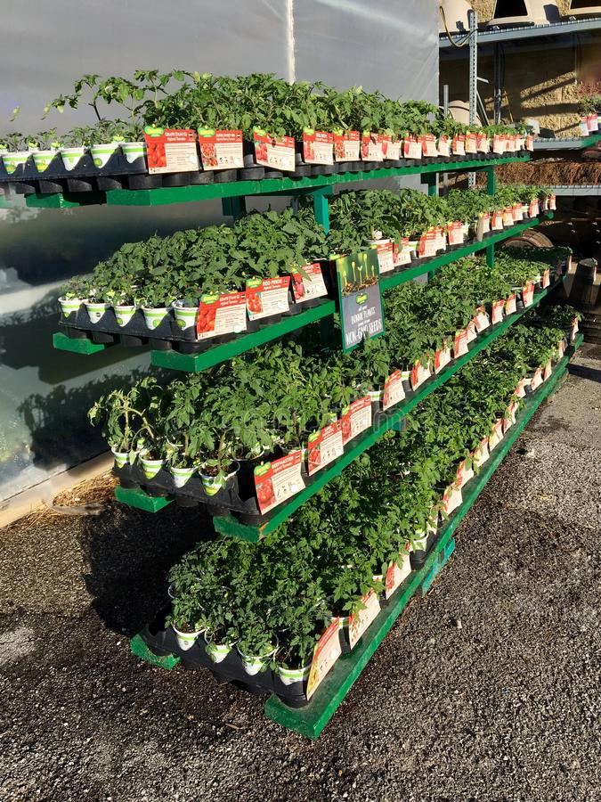 EDITORIAL: A variety of garden vegetable flats for sale at an Illinois farm and garden retailer stock image