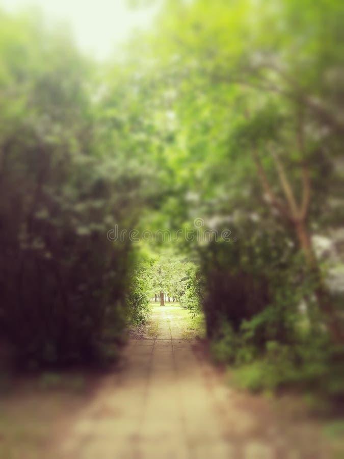 Greenwalk foto de archivo libre de regalías