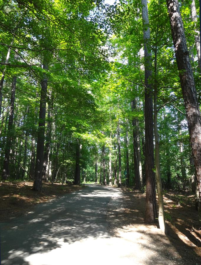 Greenway System around Shelley Lake in Raleigh, NC. Hiking the Wooded Trail around Shelley Lake in Raleigh, North Carolina stock photo