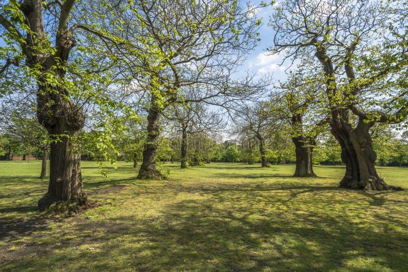 Greenwich park fotografia stock