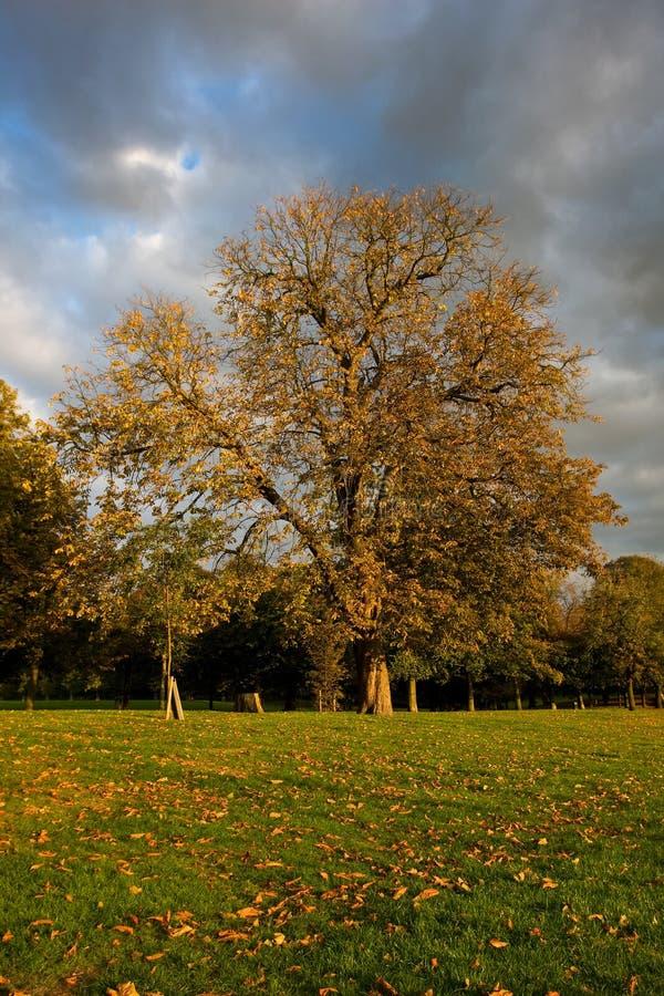 Greenwich-Park im Herbst lizenzfreie stockfotografie