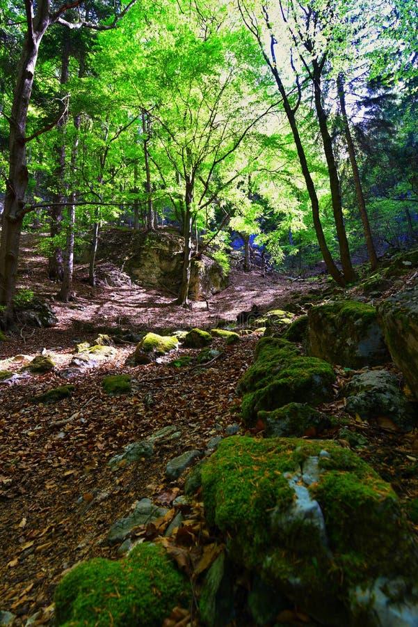 greenwood fotografia de stock