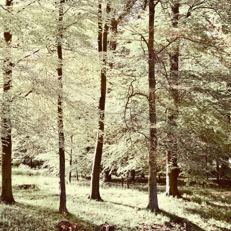 greenwood fotografia de stock royalty free